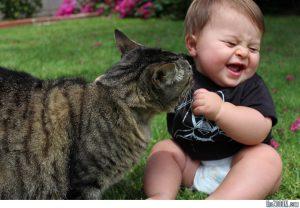 Am rămas însărcinată. Ce fac cu pisica?