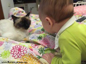 Cum îi spui copilului că animalul de companie a murit?