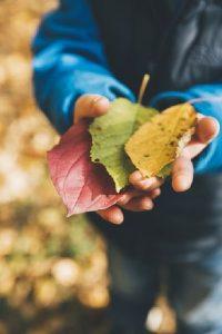 29 de activităţi pe care trebuie să le faci cu copilul toamna aceasta