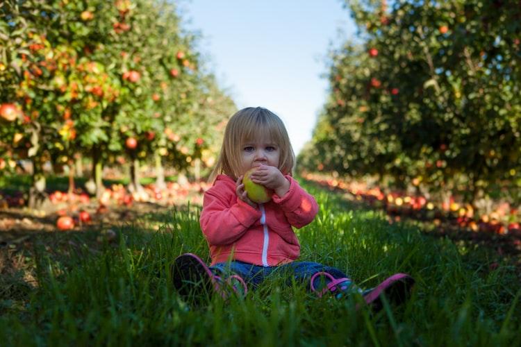 Sfaturi pentru o alimentaţie sănătoasă a copilului